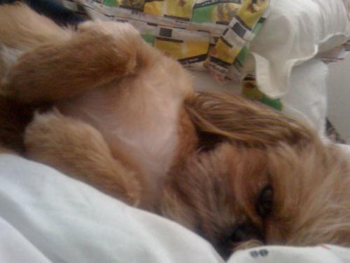 sleepy zoe